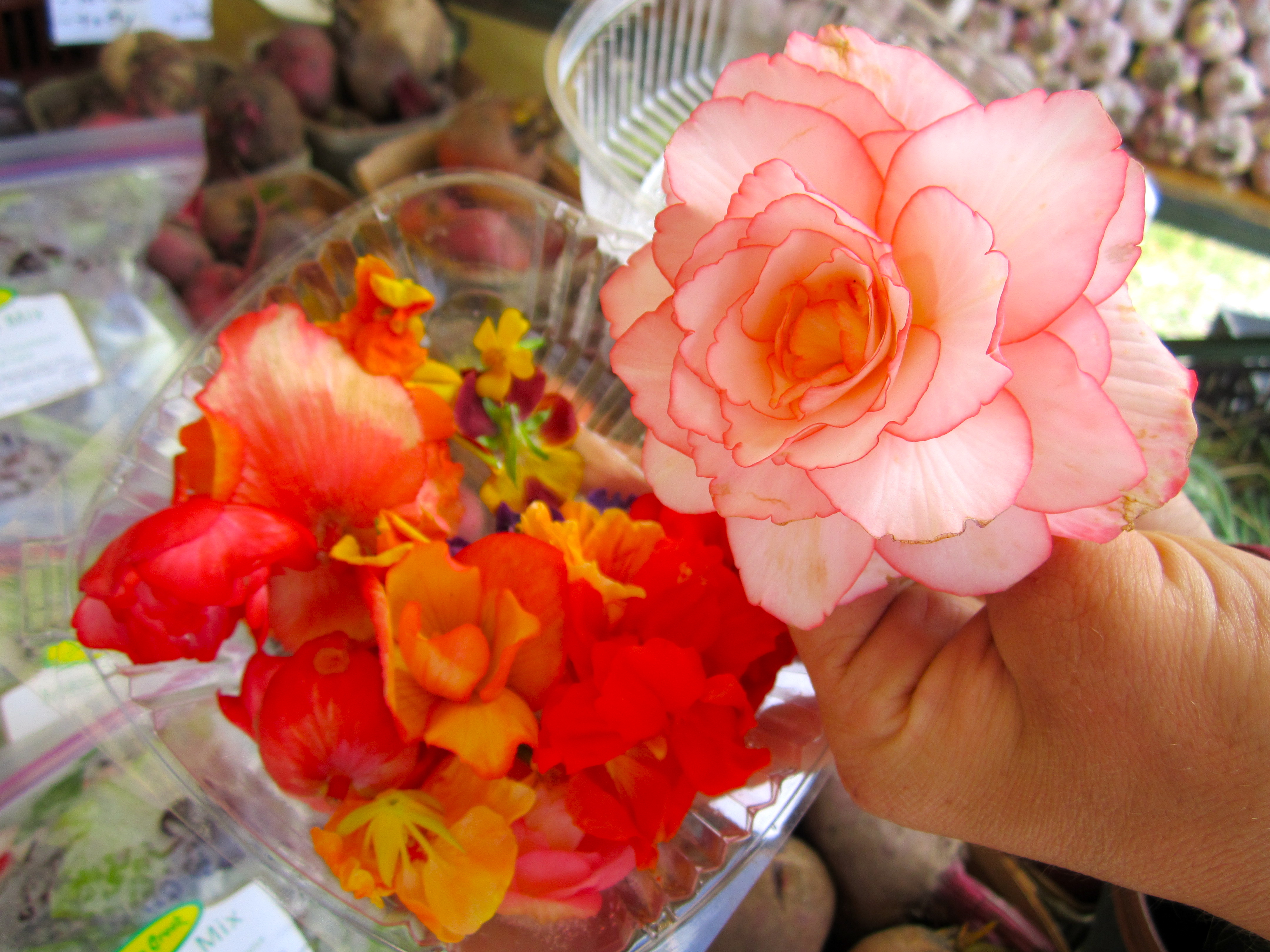 Bloomin\' Delicious – Edible Flowers   I Ate Ottawa